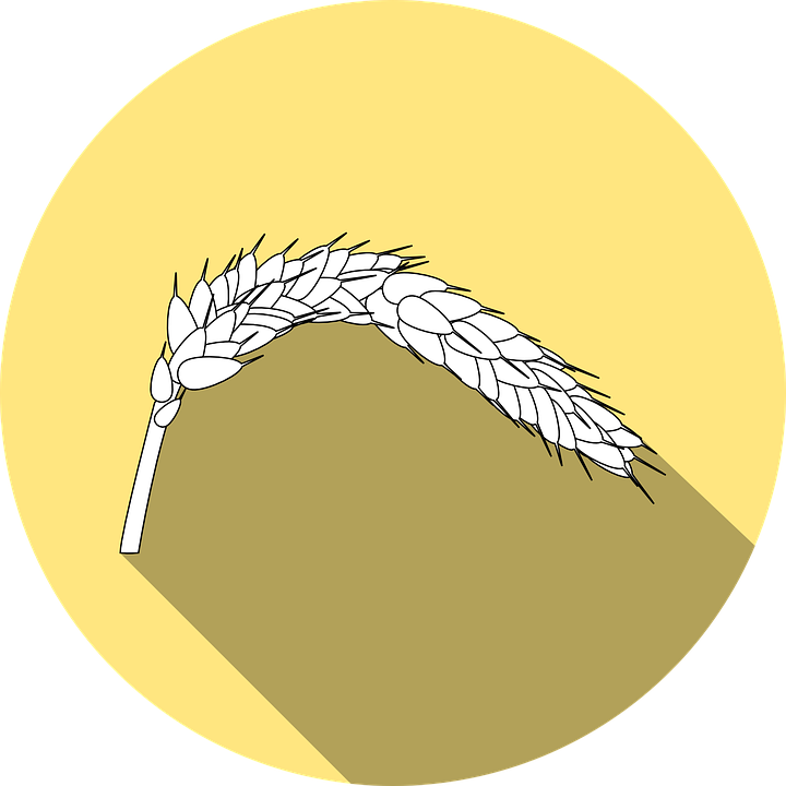 wheat-999922_960_720.png
