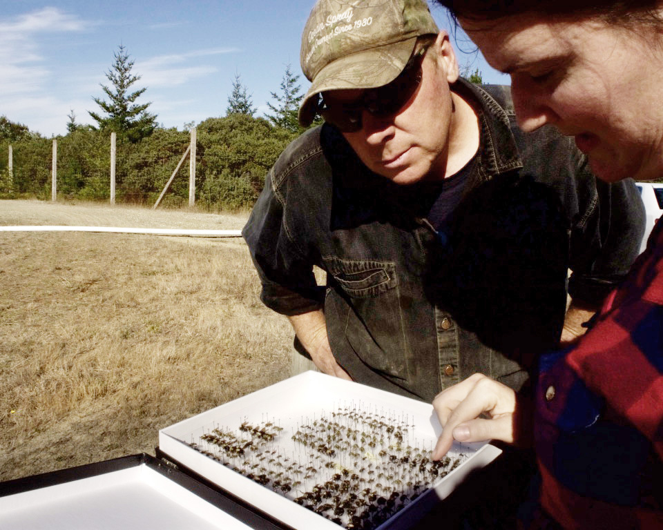 David Haueter taking his first close-up look at the bee species that live on his farm.