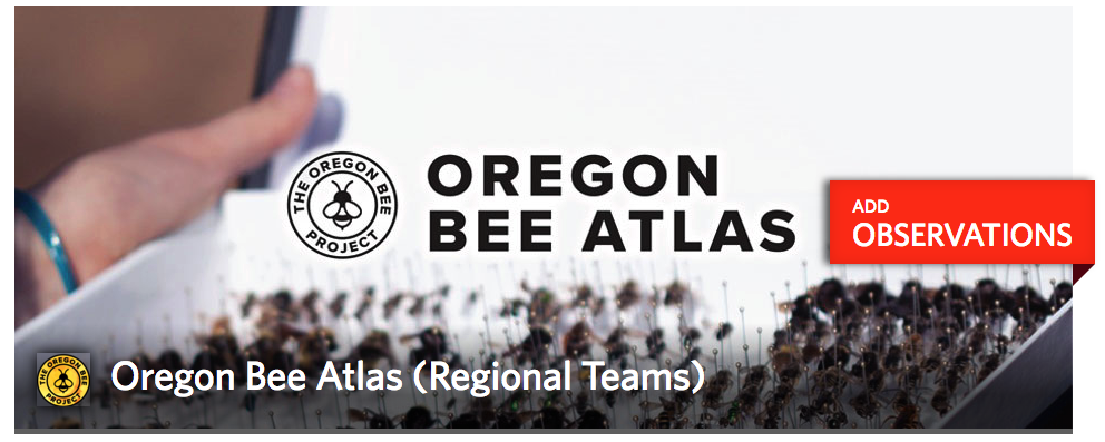 "There are two iNaturalist Projects associated with Oregon Bee Atlas. The ""Regional Team"" Project is for capturing collection events, and is made up of pictures of the flowers you are collecting bees on. The ""Anecdotal"" Project is for pictures of bees."