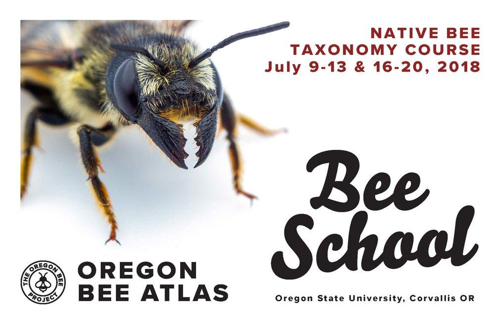 OBP_OregonBeeSchool.jpg