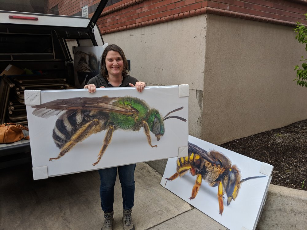 Sarah Kincaid from Oregon Department of Agriculture holds up new outreach tools, these BIG, BIG, BIG bees. Again, these bees are for our statewide outreach events, so your teams can book them out for future outreach activities.