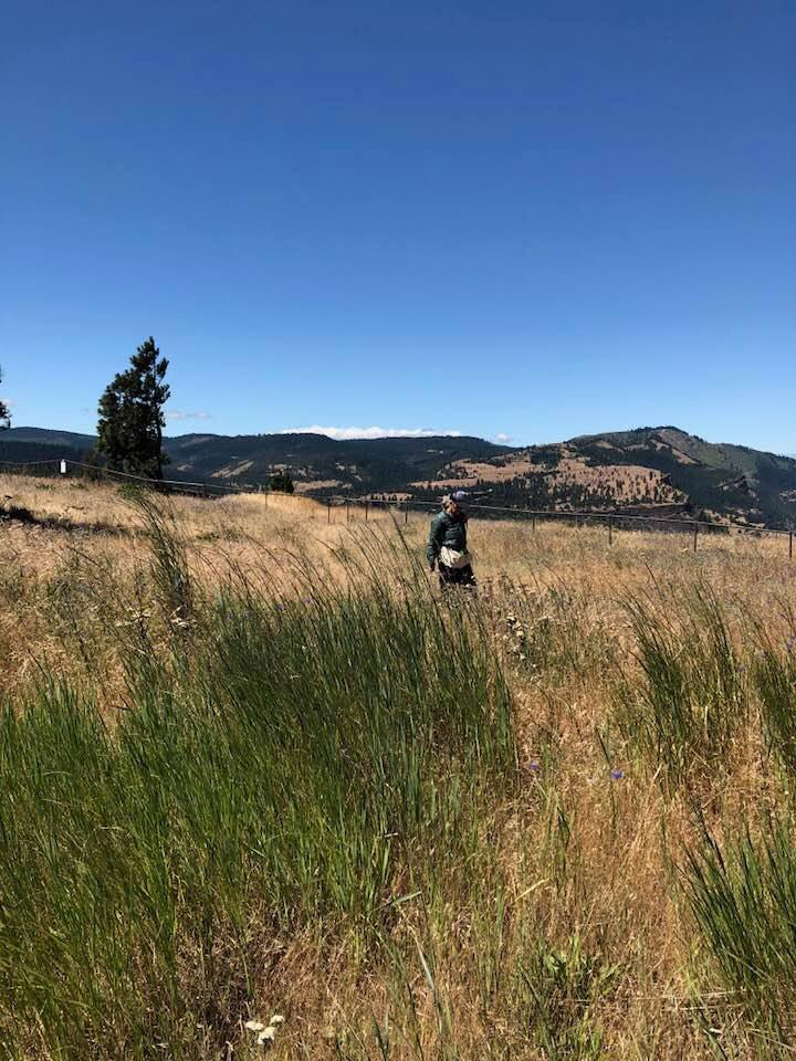 The amazing Mosier Plateau sampling site that the Columbia Gorge team has been sampling since the project started.