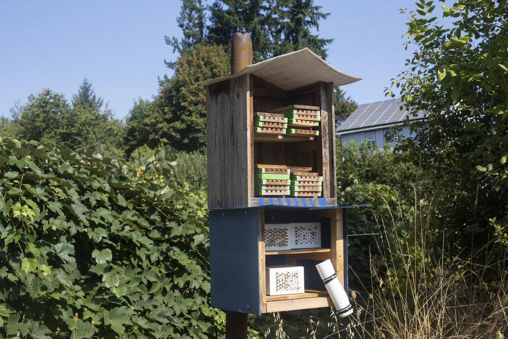 Shelter for orchard mason bees ( Osmia lignaria ).