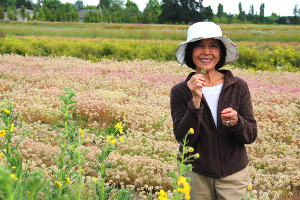 Jolly Krautmann standing among a stunning variety of wildflowers.
