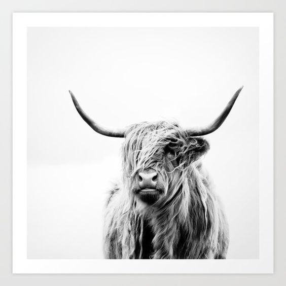 Portrait of a Highland Cow Art Print - Society 6
