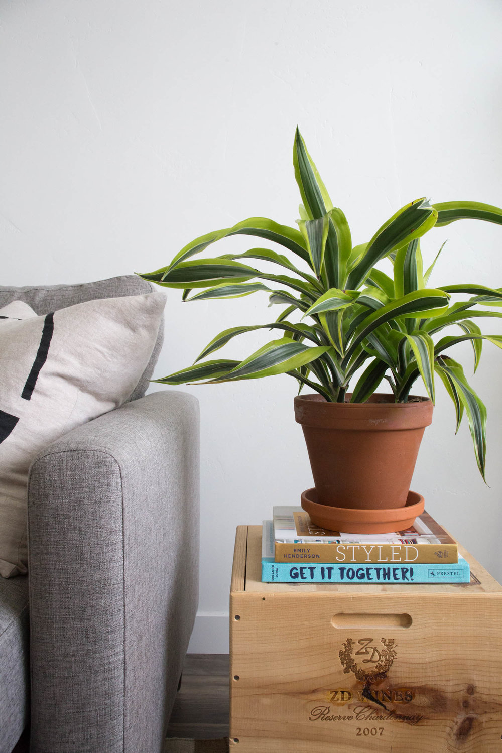 Bloomscape Delivers Plants To Your Door, and Teaches You How to Take Care of Them