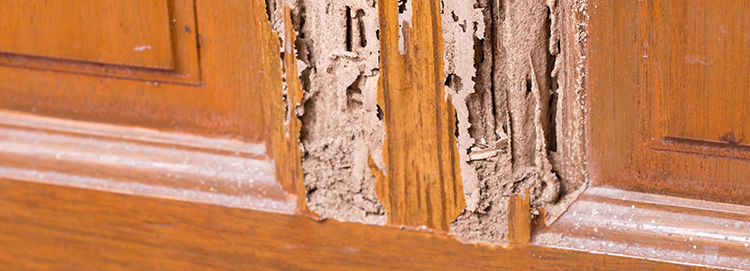 Suffolk County, NY termite extermination by Biotech termite experts