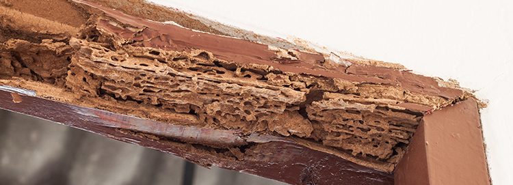Termite extermination in Suffolk County, NY