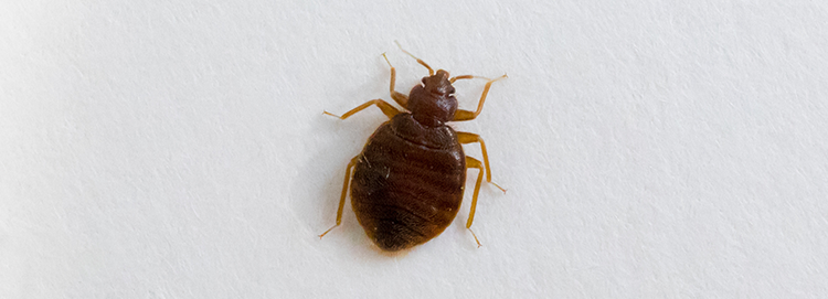 Bed bug exterminator in Bronx, NY