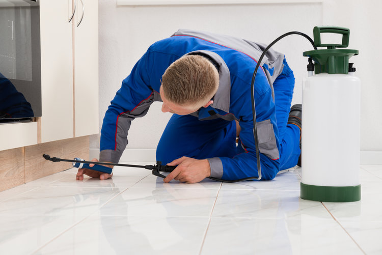 Hire A Bed Bug Exterminator Nyc Kpoofmsf