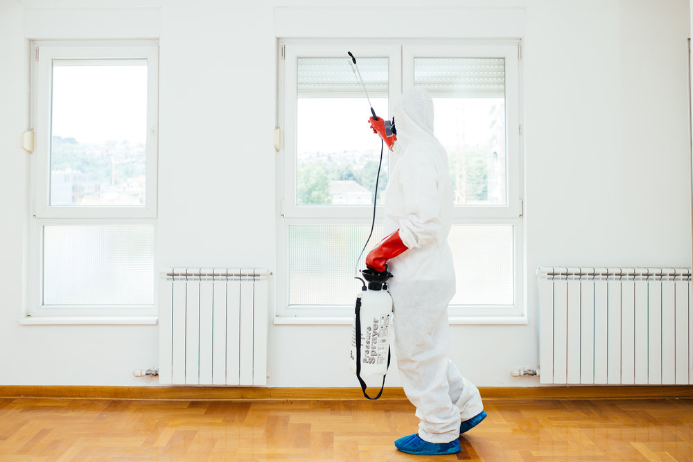 Top 4 Reasons Why You Need to Sign Up for Pest Control Services in Huntington, NY