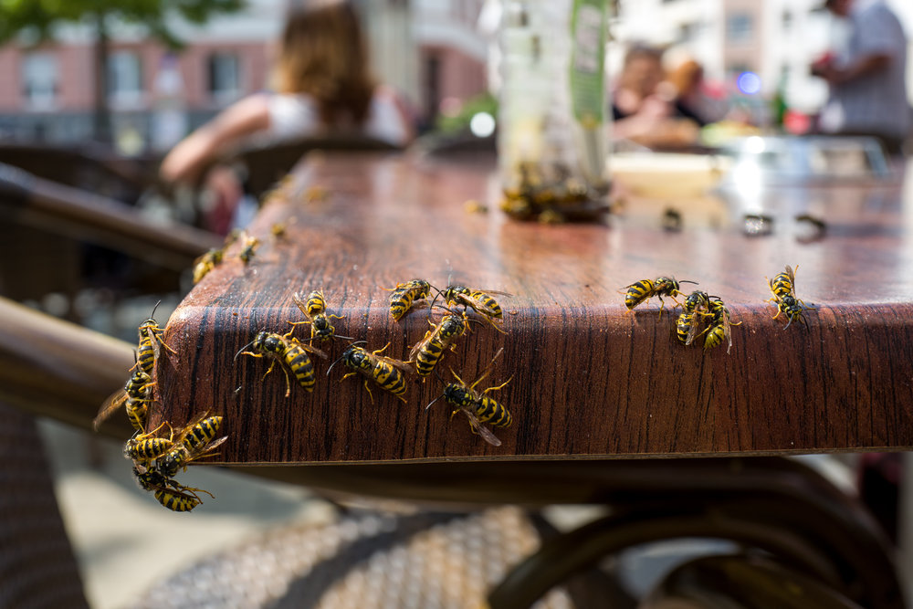 Why Your Restaurant Needs Commercial Pest Control Services in NYC