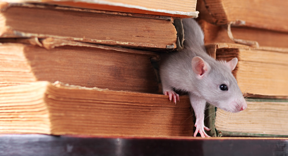 What You Need to Know About Commercial Pest Control for Schools in the Bronx, NY