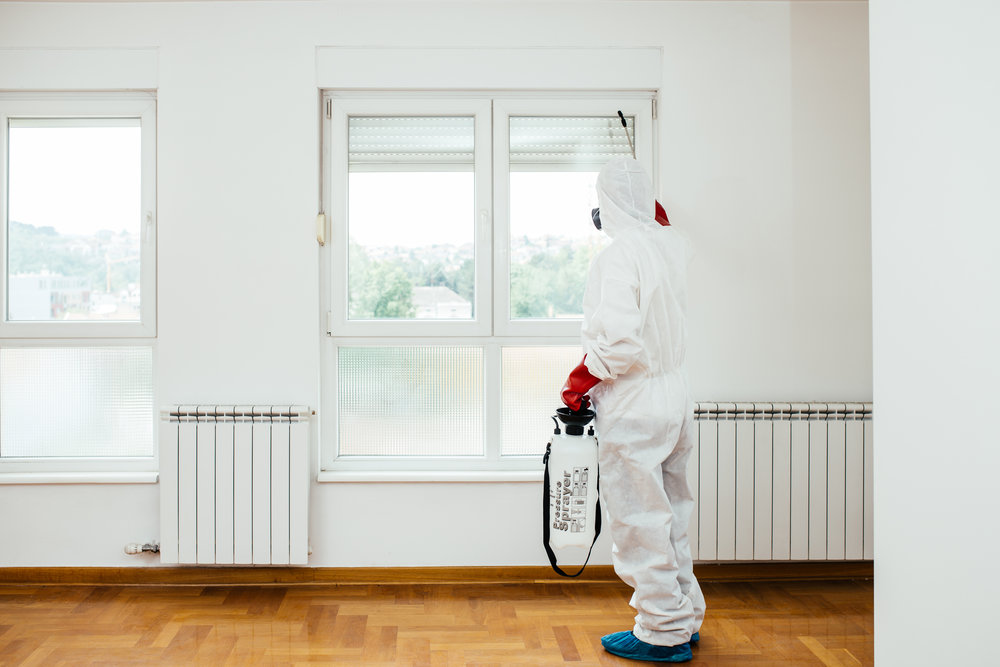 Commercial pest control in Staten Island, NY