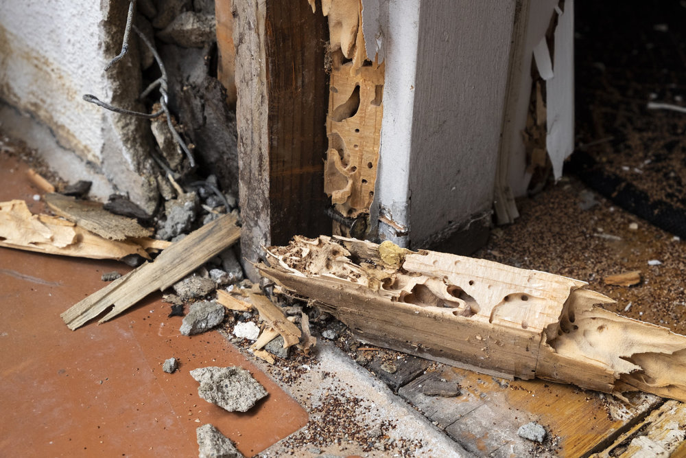 Termite extermination in Huntington, NY by certified exterminator in Long Island, NY