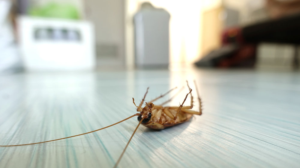 How to Prepare for Your Commercial Pest Control Visit in NYC