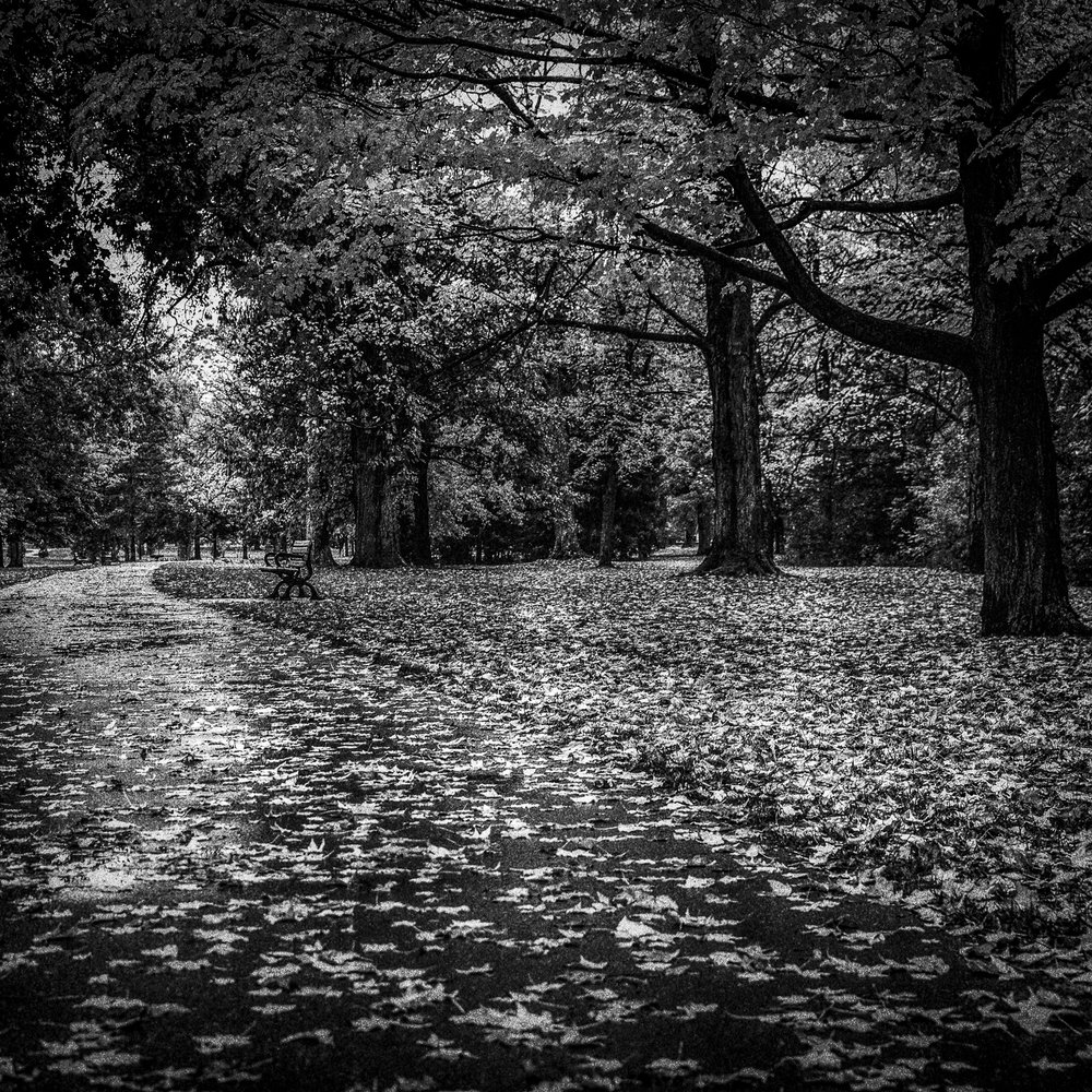 Autumn in Black and White