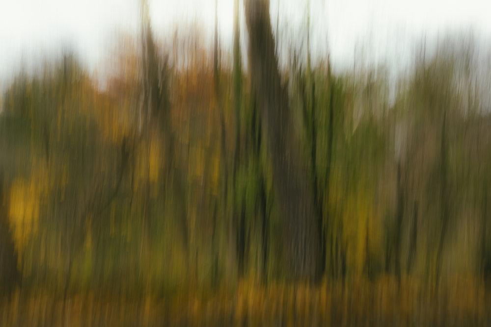 Autumn No. 9