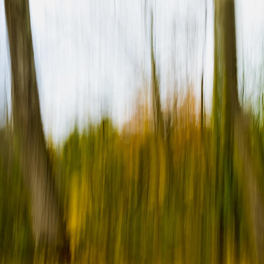 Autumn No. 12