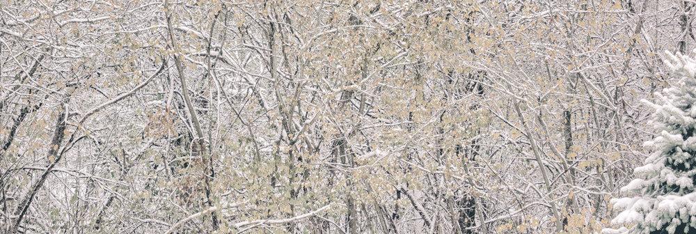 Winter Abstract No. 1