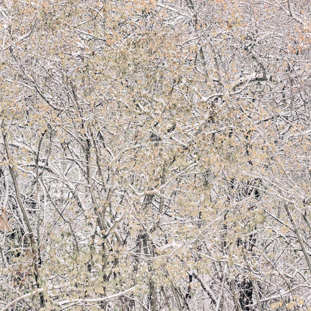 Winter Abstract No. 4