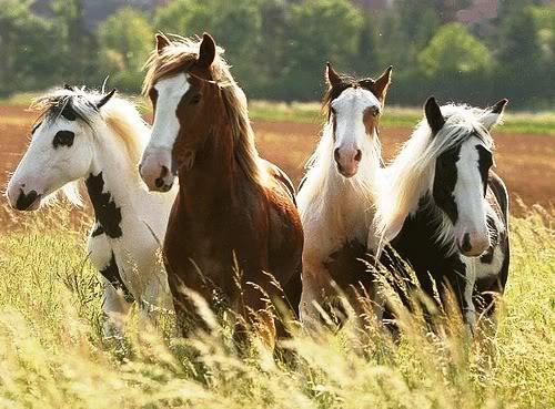 horses208.jpg