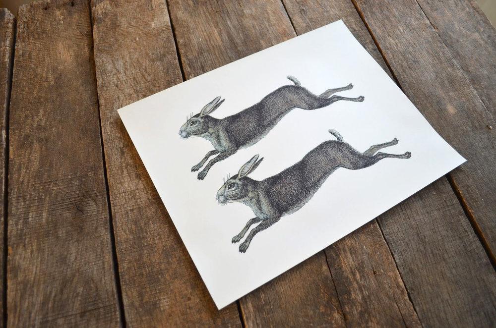 rabbit_iron-ons_0576.jpg
