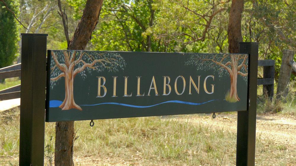 Billabong still (11 of 12).jpg