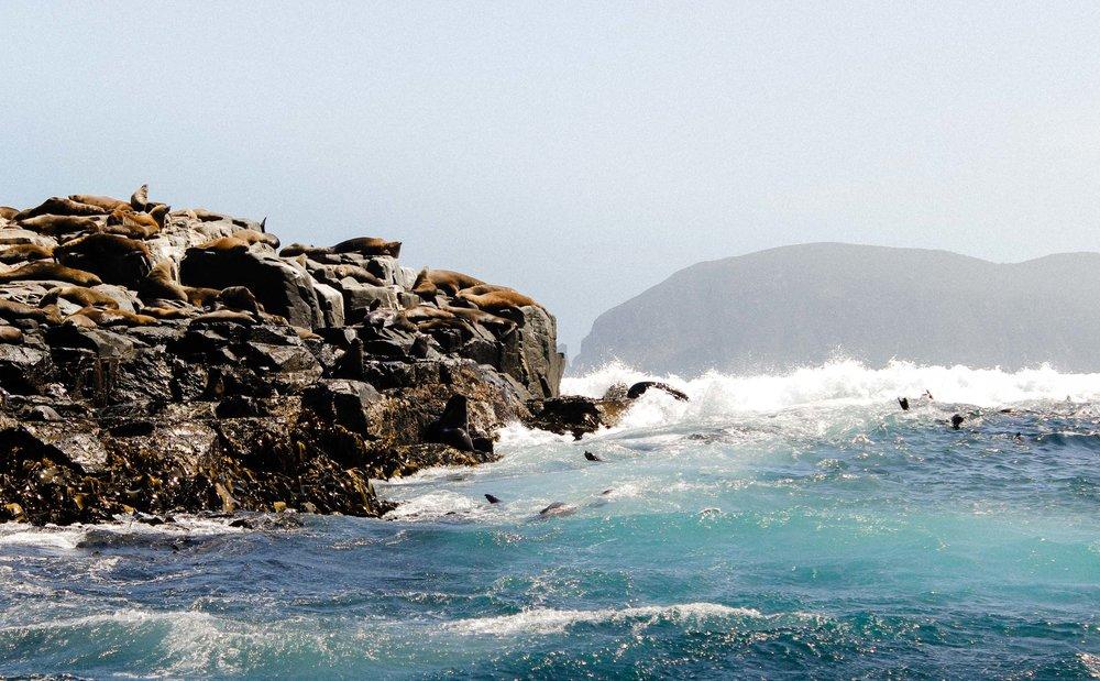 Wild Seas. Bruny Island, Tasmania, Australia 2016.