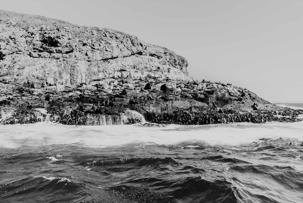 Wild Seas, Bruny Island,Tasmania 2016.