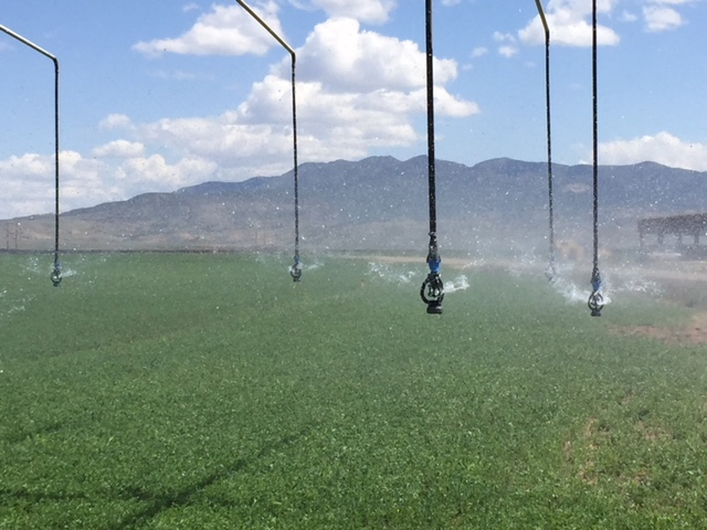 Sprinklers at the Ute Farm. [Photo courtesy of Eric Whyte]