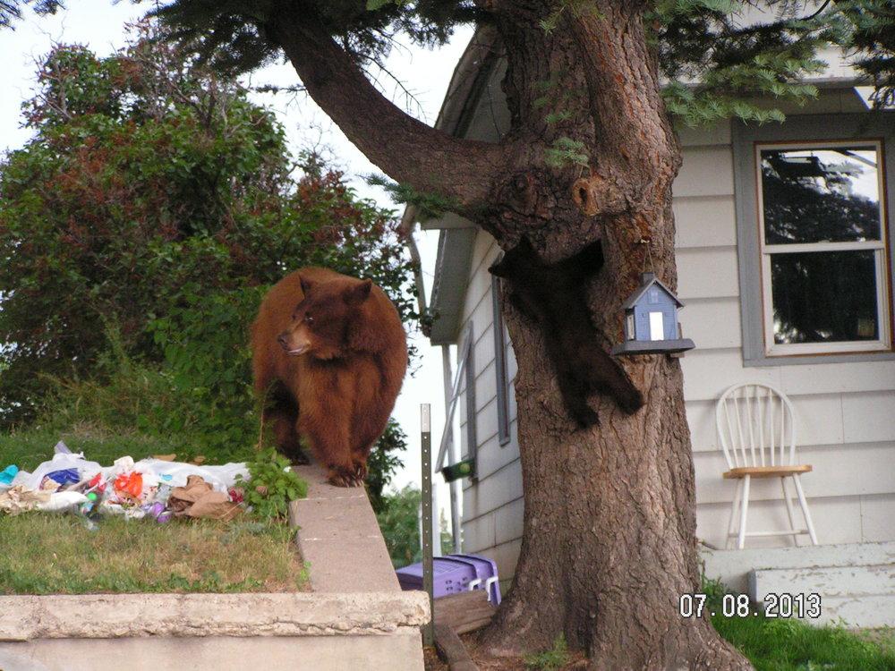 A bear and cub sort through trash near a home. [Photo courtesy of Colorado Parks & Wildlife]