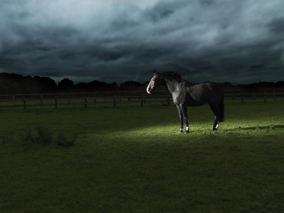 145477-7702327-horse2__0220_2.jpg