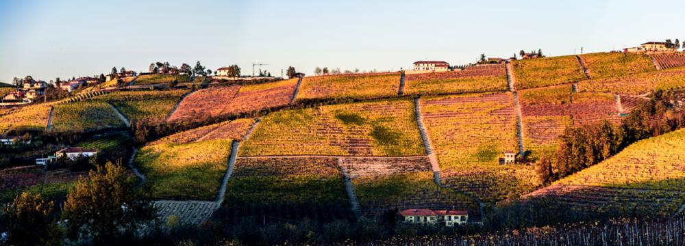 CRU PAJORE L'azienda vitivinicola Cantina Rizzi Treiso Piemonte Cru Barbaresco Langhe roero Vigneti Vigne vini piemontesi