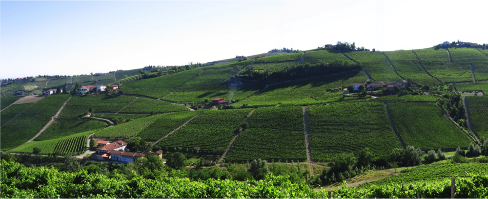 "Rizzi Company owns 4 hectares ( 10 acres) of vineyard in this small Cru, but for now they are not planted with Nebbiolo, but in Moscato. Hence there isn't in the market any Rizzi Barbaresco ""Manzola"", but in the future."