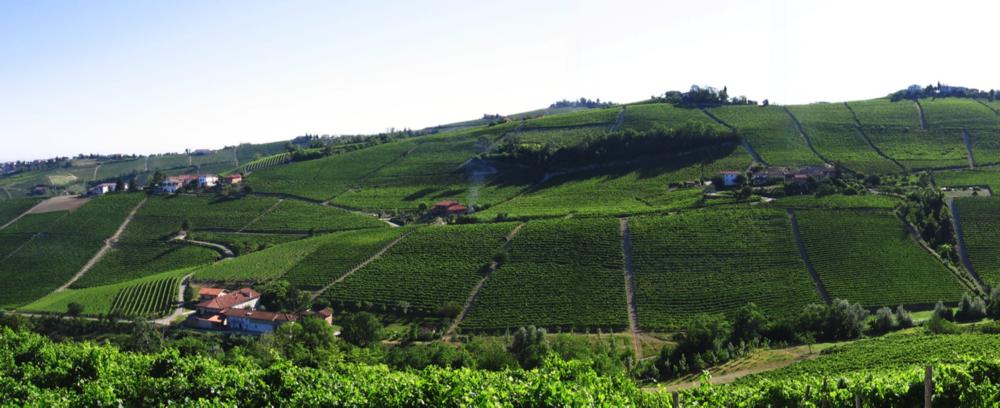 cru manzola L'azienda vitivinicola Cantina Rizzi Treiso Piemonte Cru Barbaresco Langhe roero Vigneti Vigne vini piemontesi