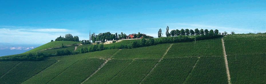 cascina rizzi azienda vitivinicola treiso piemonte langhe roero vini barbaresco cru