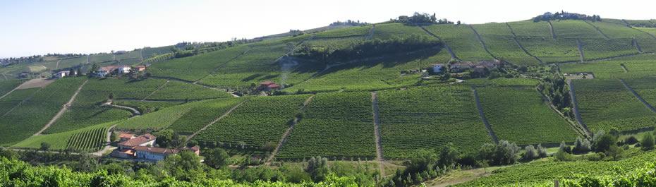 CASCINA MANZOLA cascina rizzi azienda vitivinicola treiso piemonte langhe roero vini barbaresco cru
