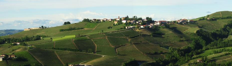 podere stella cascina rizzi azienda vitivinicola treiso piemonte langhe roero vini barbaresco cru
