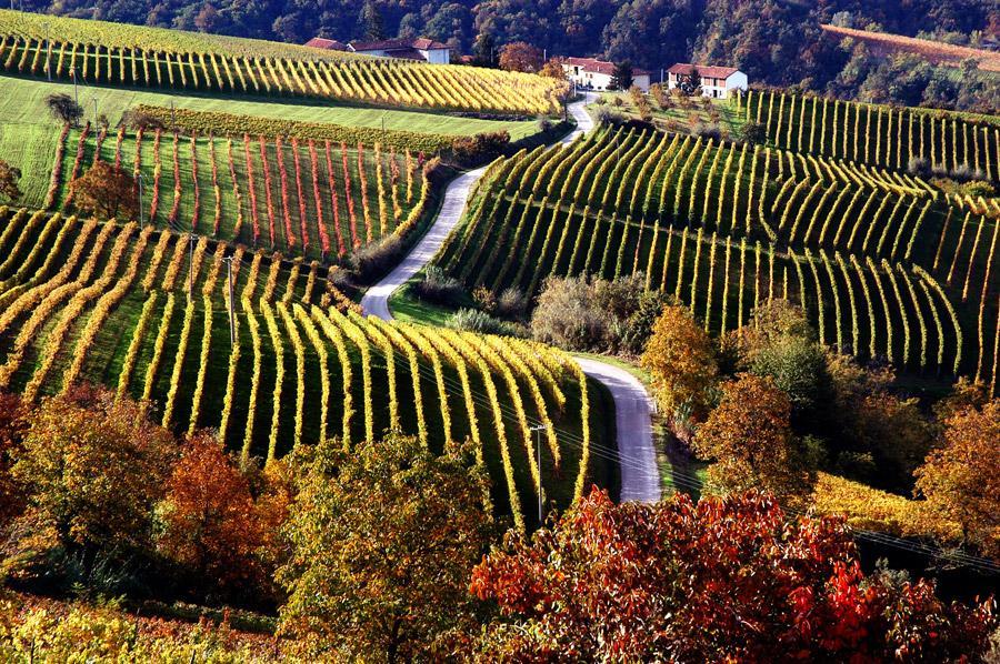 treiso comune langhe roero piemonte vini