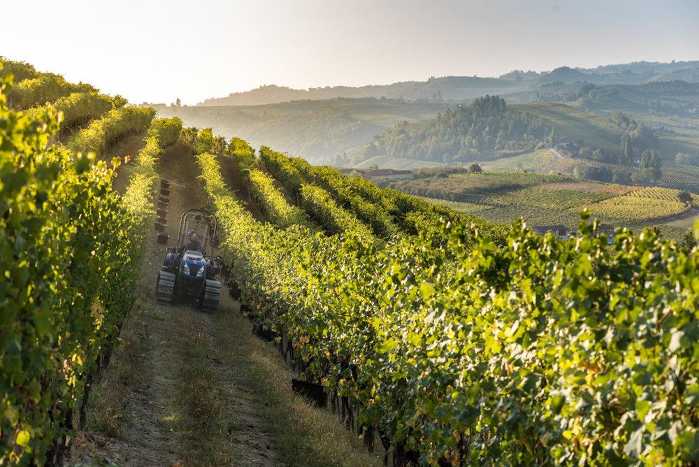 azienda vitivinicola rizzi treiso cuneo piemonte cantina rizzi langhe roero wine barbaresco barolo dolcetto barbera arneis spumante piemonte vino degustazioni acquisto bottiglie di vino langa_1484.jpg