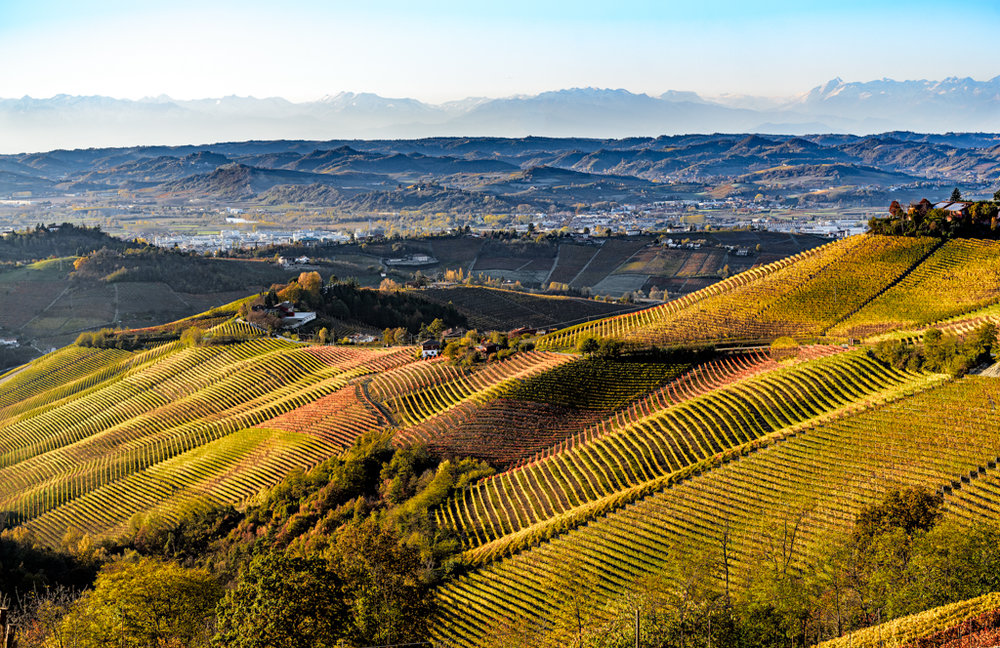 THE LANGA HILLS AND THE VINEYARDS OF THE BARBARESCO MAKE A BEAUTIFUL AND MAGICAL FRAME AROUND THE RIZZI WINERY. -