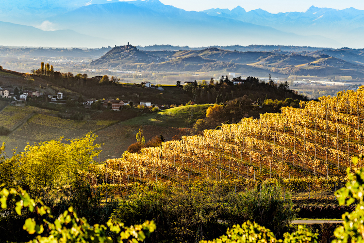 barbaresco langhe roero cantina rizzi treiso vini .jpg