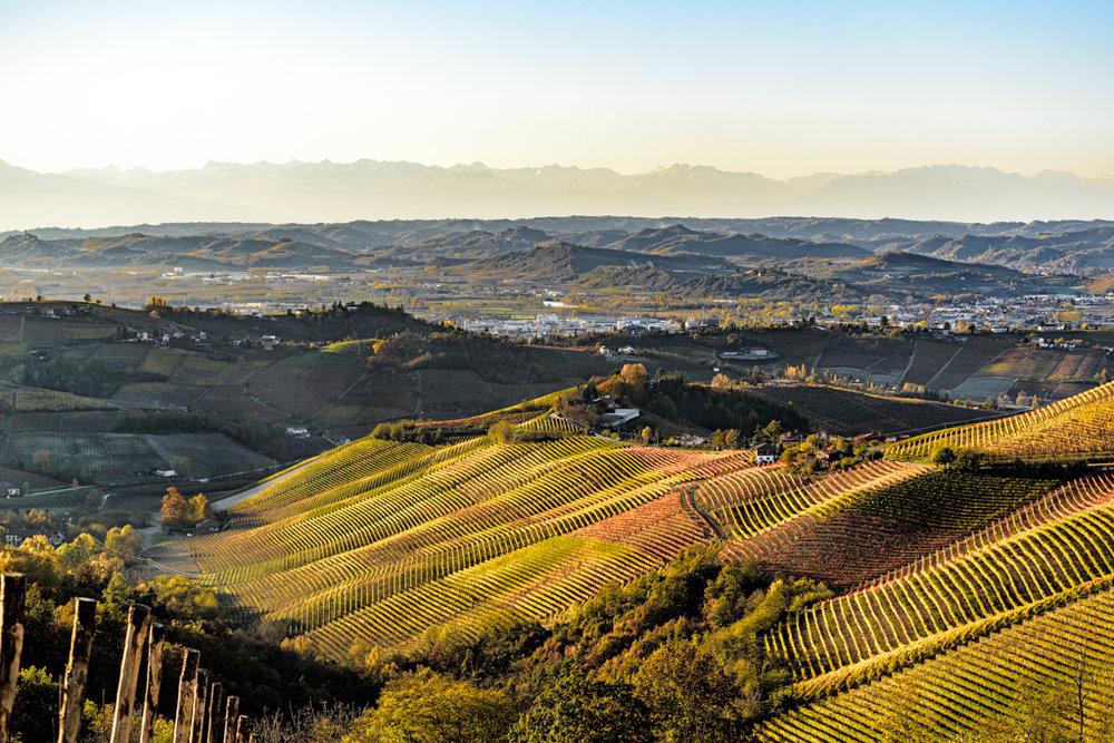 L'azienda vitivinicola Cantina Rizzi Treiso Piemonte Cru Barbaresco Langhe roero Vigneti Vigne vini piemontesi