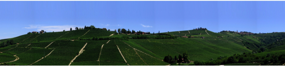 CRU RIZZI - In which we find the Boito Vineyards