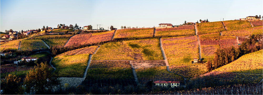 CRU PAJORE' - Pajorè is incontestably one of most famous vineyards in the Langhe