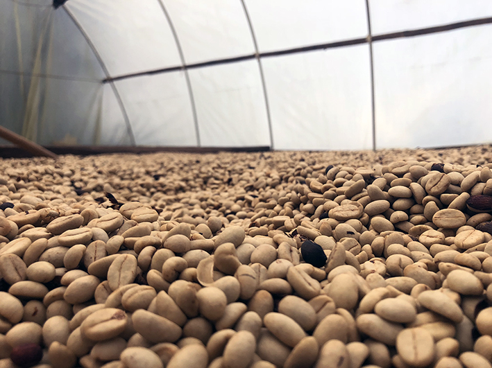 The new drying facility makes it possible for Emilio to dry the beans in a better and safer way. It has improved quality and makes him get better paid.