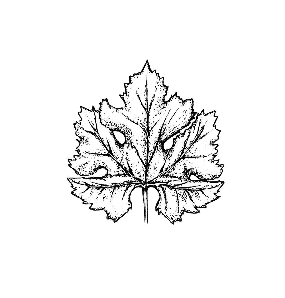 cab-franc-leaf.jpg