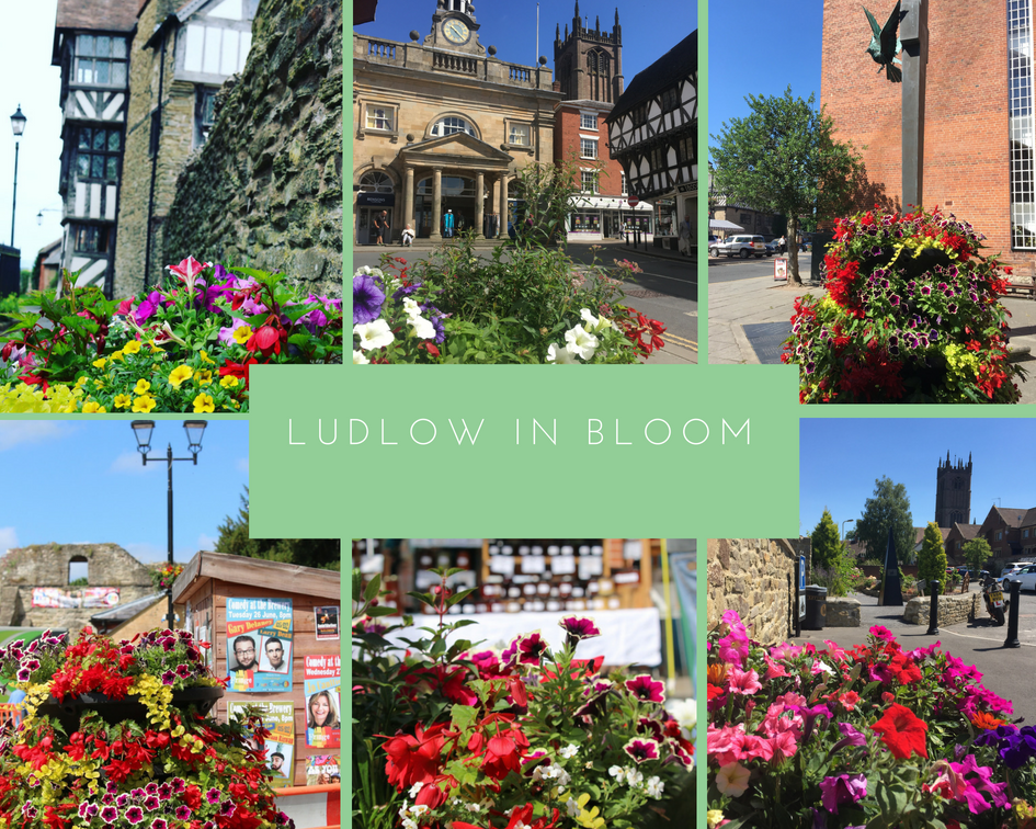 Ludlow in bloom.png