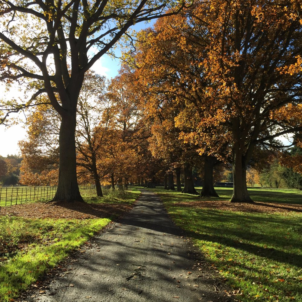 Pick and choose a lovely spot for a cycle ride in and around Ludlow